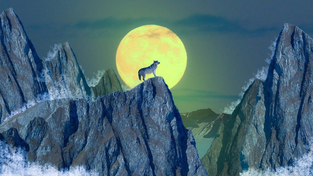 Werewolf on icey mountains Magic spells to turn into a werewolf